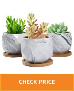 cute pots for succulents