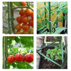 planting tomatoes in pots