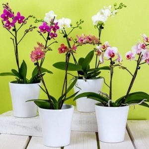 best orchid containers