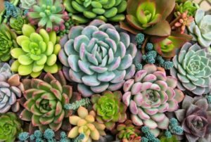 succulent pots amazon
