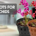 8 Best Pots for Orchids to Beautify your Home