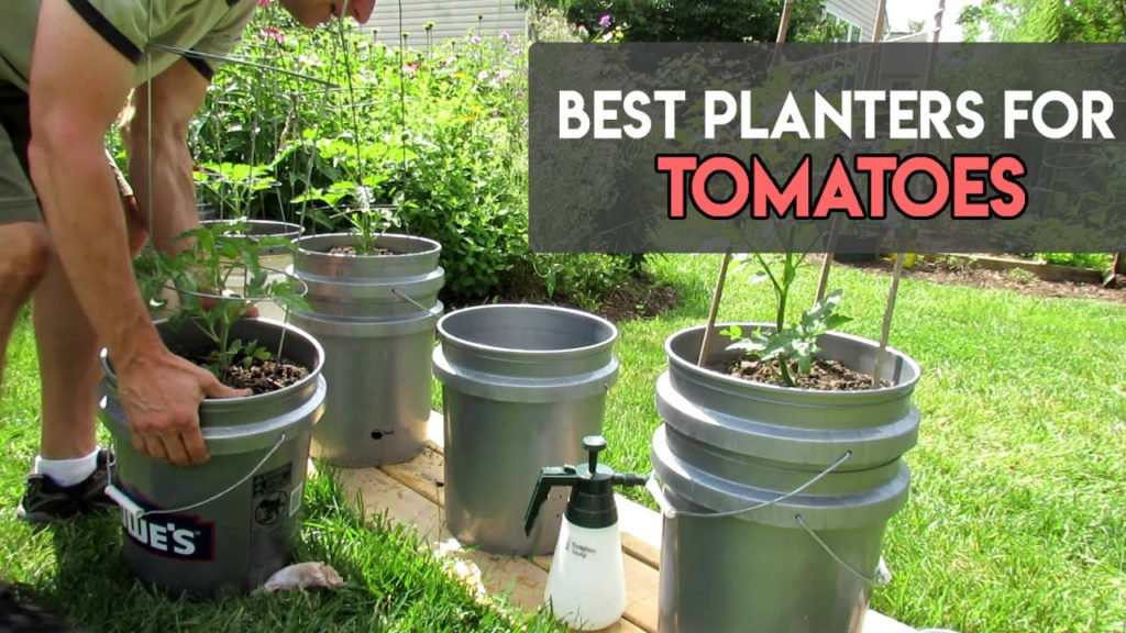 best-planters-for-tomatoes
