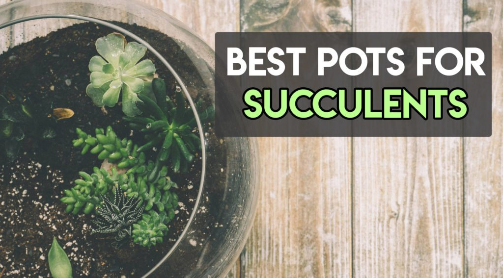best-pots-for-succulents