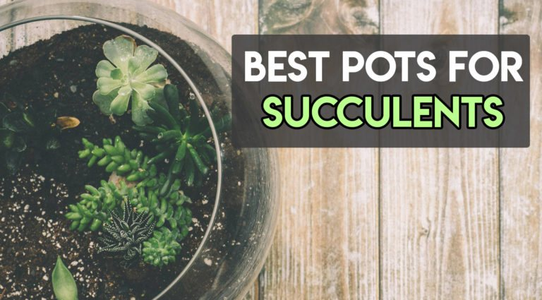 8 Best Pots for Succulents To Choose From [Aesthetic Ones]