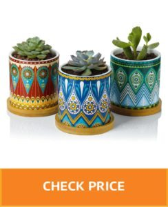 decorative plant pots indoor