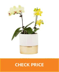 glass pots for orchids