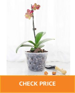 clear plastic pots for orchids