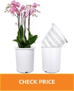 orchid pots for sale