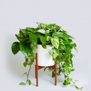 best pots for plants indoor