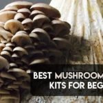 Best Mushroom Growing Kit For Beginners 2021 [Ultimate Guide]