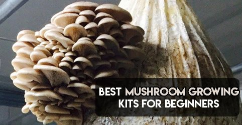 best mushroom growing kit for beginners