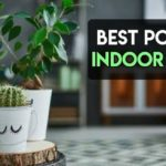 Best Pots for Indoor Plants of 2021 [Top 11 Reviewed]