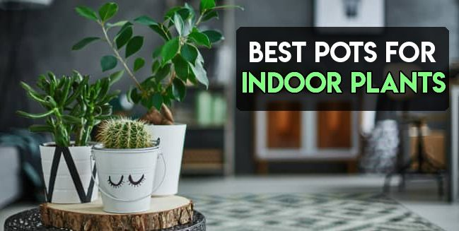 best pots for indoor plants