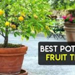 6 Best Pots for Fruit Trees To Buy [Most Fruitful Ones]