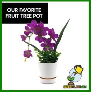 best fruit tree pot