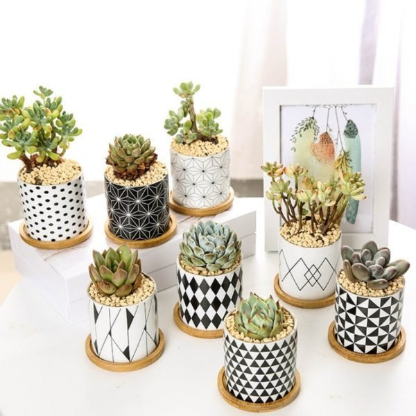 Ceramic-Pots-for-Succulent