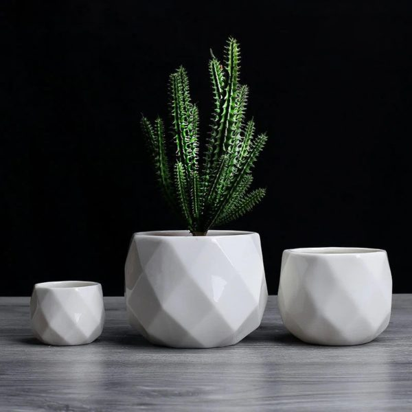 small white pots for succulents