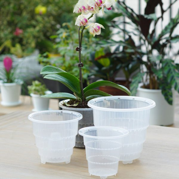clear pots for orchids