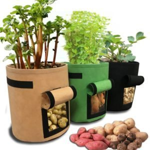 Tomato Grow Bags in Colors