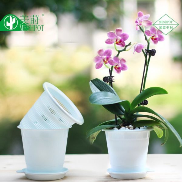 decorative pots for orchids
