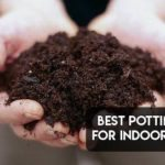Best Potting Soil for Indoor Plants [Top 10 Reviewed]