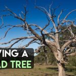 Why the Top of Your Tree is Dying & What to do?