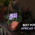 7 Best Pots For African Violets To Choose From [Ultimate Buying Guide]