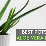 8 Best Pots For Aloe Vera Plants For Perfect Growth [Review + Guide]