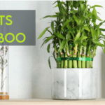 Best Pots For Bamboo To Plant At Home [Ultimate Guide]