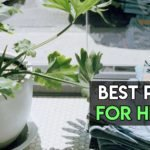 8 Best Pots for Herbs To Grow Indoors [Top Ones Reviewed]