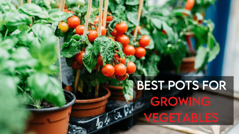 6 Best Pots for Growing Vegetables [Ultimate Guide]
