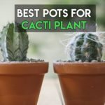 Best Pots For Cacti To Buy Online [Top 8 Reviewed]