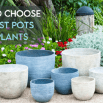 How To Choose The Best Pots For Plants