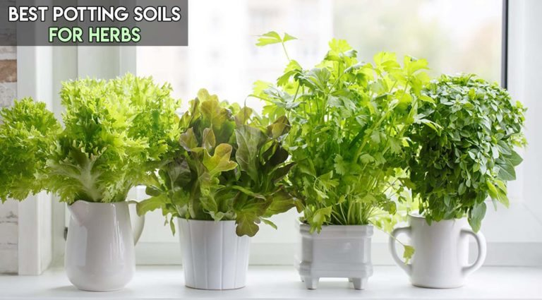 8 Best Potting Soils For Herbs [Top Reviewed]