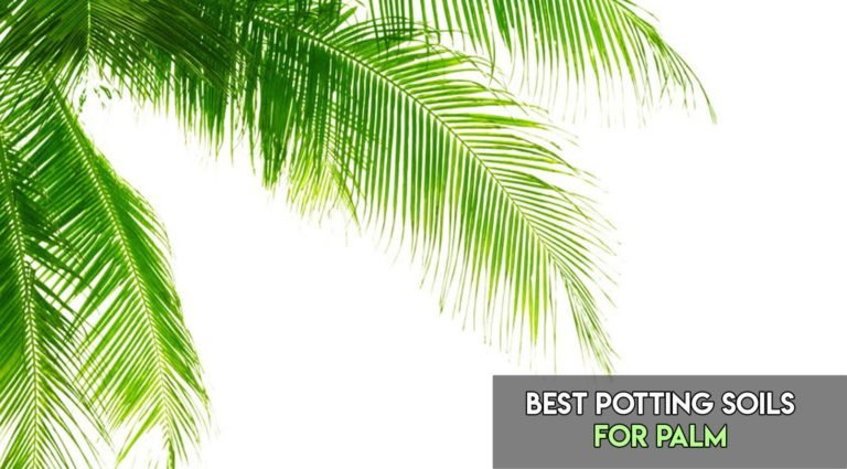 10 Best Soils For Palm Trees In Pots [Buyer's Guide]