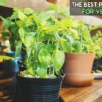 8 Best Soil for Vegetables in Pots [Top Reviewed]