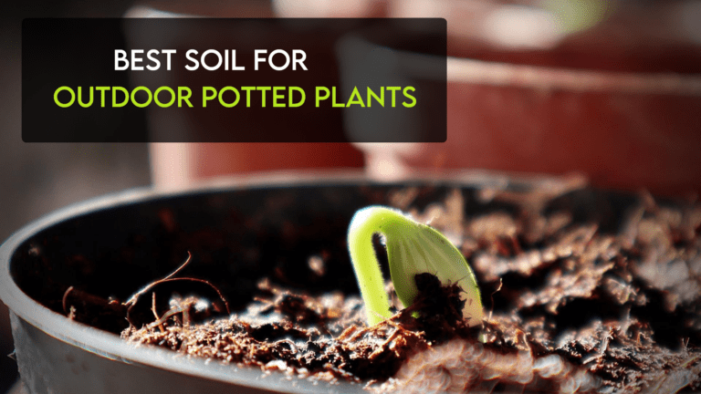 Best Soil For Outdoor Potted Plants [Top Rated Reviewed]