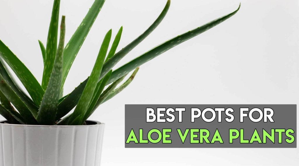 best pots for aloe vera plants