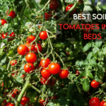 10 Best Soil For Tomatoes in Raised Beds [Buyer's Guide]