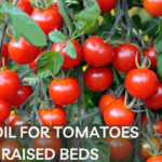 8 Best Soil for Tomatoes in Raised Beds [Review + Guide]