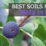 9 Best Soils for Fig Trees in Pots [Buyer's Guide]