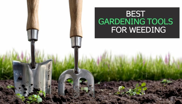 12 Best Gardening Tools for Weeding [Review + Guide]