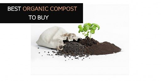 Best Organic Compost to Buy