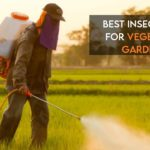 Best Insecticide For Vegetable Garden [Top-Rated]