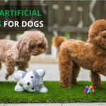 Best Artificial Grass for Dogs [Top 10 Reviewed]