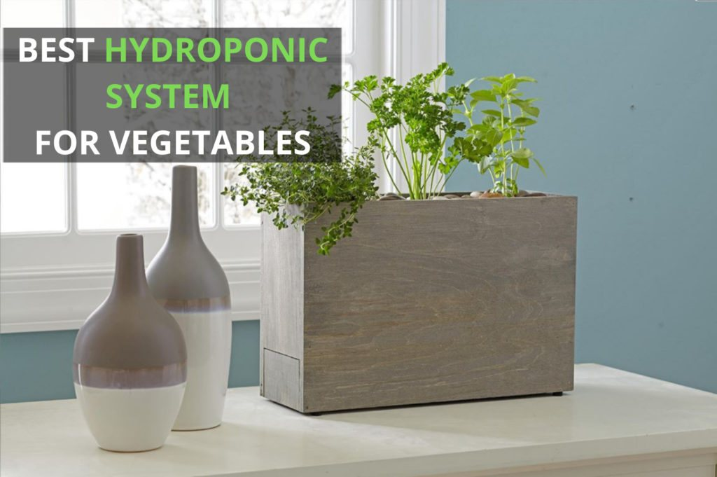 Best Hydroponic System for Vegetables