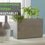 Best Hydroponic System for Vegetables [Ultimate Guide]