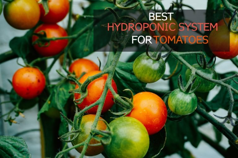 10 Best Hydroponic Systems for Tomatoes [Review + Guide]