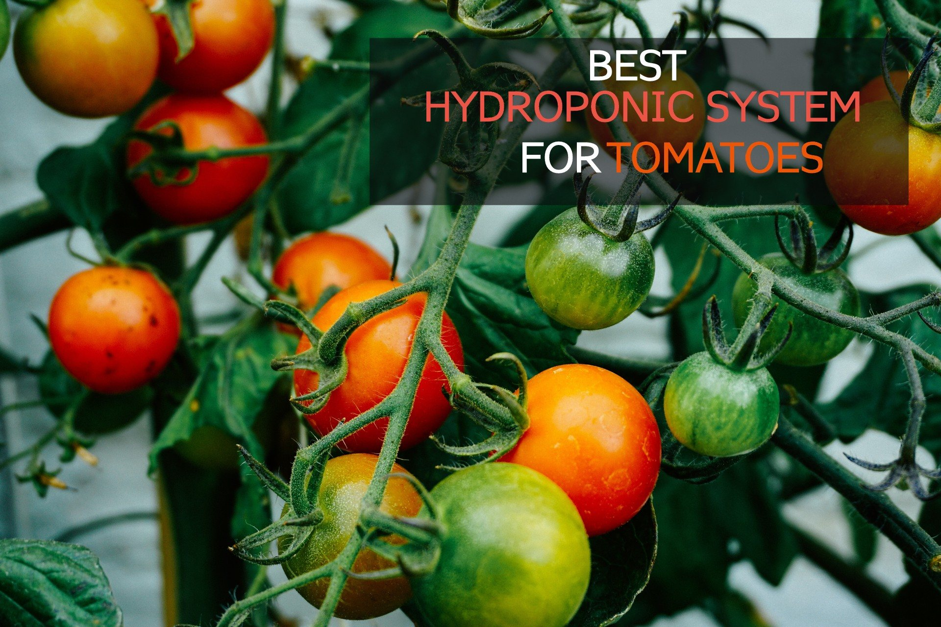 best hydroponic system for tomatoes