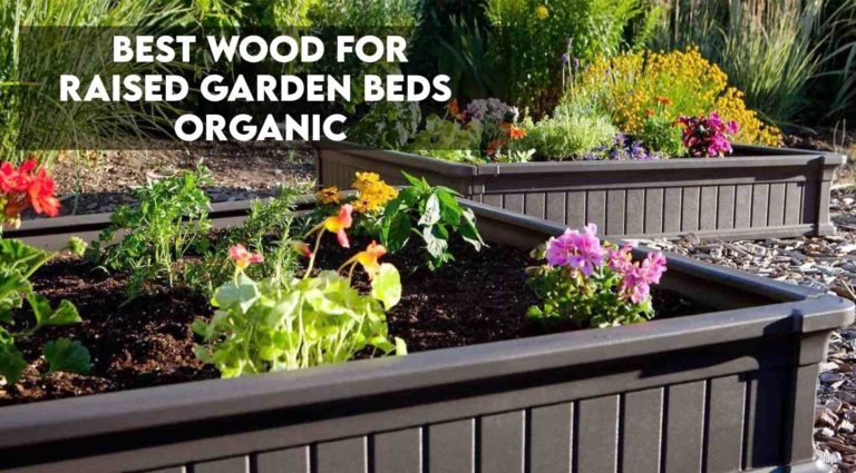 Best Wood For Raised Garden Beds [Organic Edition]